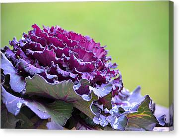 Layers Of Wet Beauty Canvas Print by Sandi OReilly