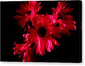 Lazerlight Floral Canvas Print by Mickey Hatt