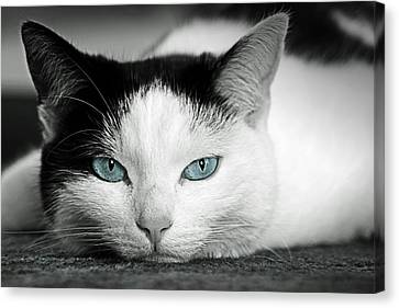 Lazy Cat Canvas Print by Claudia Moeckel