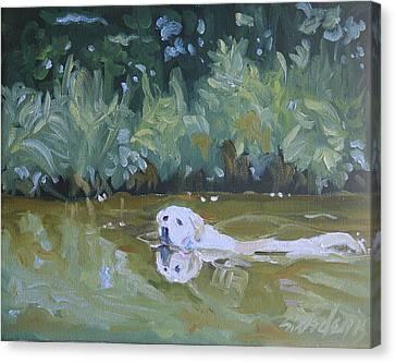 Lazy Day Swim Canvas Print by Sheila Wedegis
