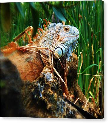 Canvas Print featuring the photograph Lazy Lizard Lounging by Joy Braverman
