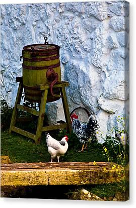 Le Coq Canvas Print