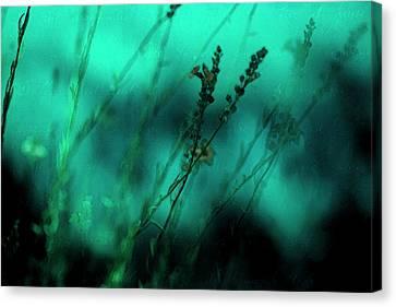 Le Jardin Canvas Print by Bonnie Bruno