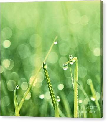 Grass Canvas Print - Le Reveil - S02b3 by Variance Collections