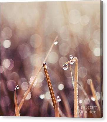 Raining Canvas Print - Le Reveil - S04d2 by Variance Collections