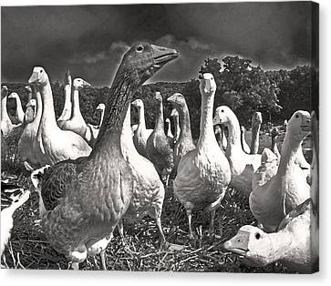 Canvas Print featuring the photograph Leader Of The Pack by William Fields