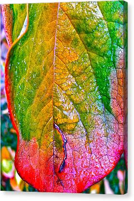 Leaf 2 Canvas Print by Bill Owen