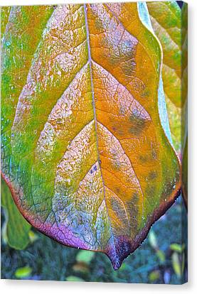 Leaf Canvas Print by Bill Owen