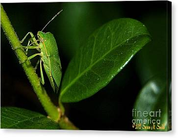 Leaf Me Alone Canvas Print