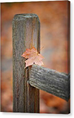 Leaf On The Fence Canvas Print by Brian Mollenkopf