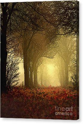 Bare Trees Canvas Print - Leaf Path by Robert Foster