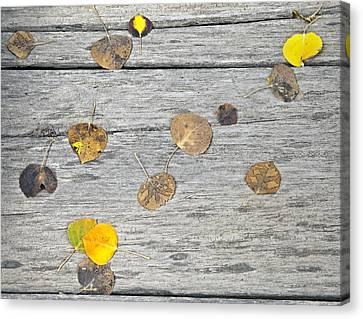 Leaf Patterns Canvas Print by James Steele