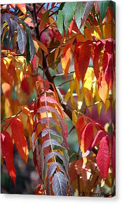 Canvas Print featuring the photograph Leaf Peeping by Penny Hunt