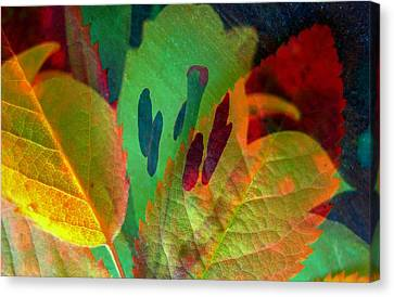 Leaf Reflections Canvas Print by Shirley Sirois