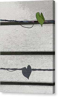 Canvas Print featuring the digital art Leaf Shadow by Holly Ethan