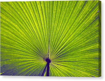 Flowers Canvas Print - Leaf by Sumit Mehndiratta