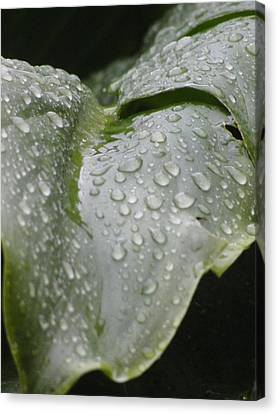 Canvas Print featuring the photograph Leafy Greens by Tiffany Erdman