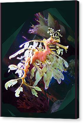 Canvas Print featuring the photograph Leafy Sea Dragon by Ginny Schmidt