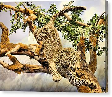 Leaping Leopard Canvas Print by Kristin Elmquist