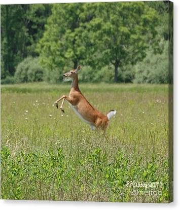 Leaping White-tail Deer Canvas Print