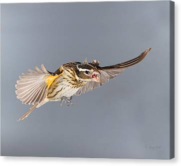 Canvas Print featuring the photograph Leave Him Alone by Gerry Sibell