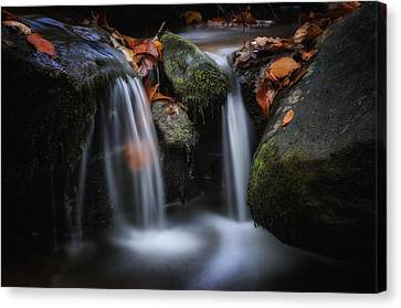 Leaves Along Small Stream 1 Canvas Print by Steve Hurt
