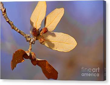 Leaves And Berries Canvas Print by Jeremy Linot