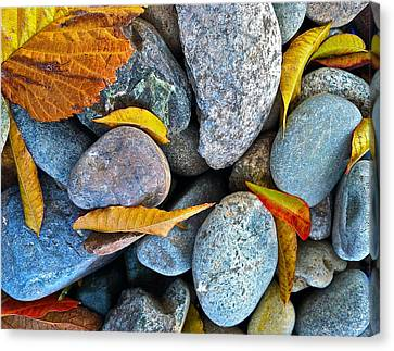 Leaves And Rocks Canvas Print by Bill Owen