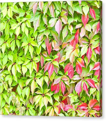 Leaves Background Canvas Print