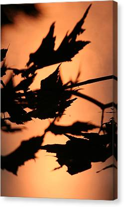 Leaves In Sunset Canvas Print by Carolyn Reinhart