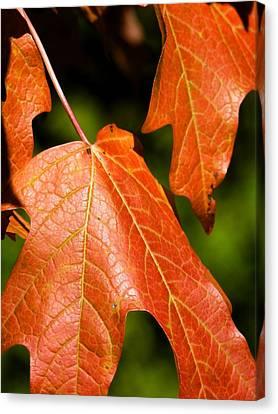 Leaves Of Orange Canvas Print by Beth Akerman