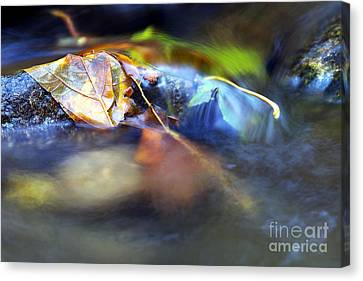 Leaves On Rock In Stream Canvas Print by Sharon Talson