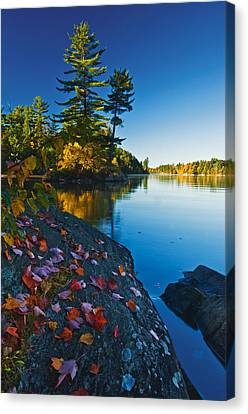Leaves On Rock, Killarney Provincial Canvas Print by Mike Grandmailson