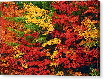 Leaves On Trees Changing Colour Canvas Print by Mike Grandmailson