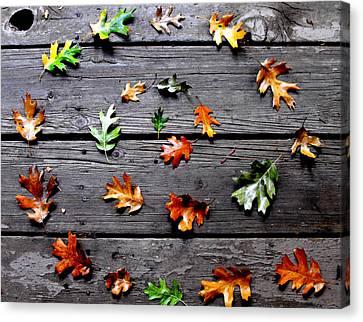 Leaves Canvas Print by Skye Zambrana