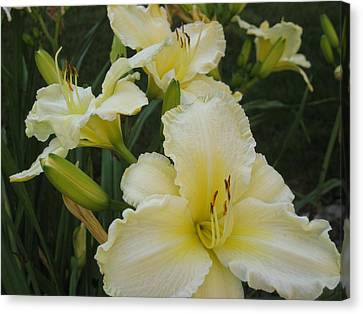 Lemon Daylilies Canvas Print by Bonnie Goedecke