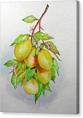 Lemons Canvas Print by Elena Mahoney