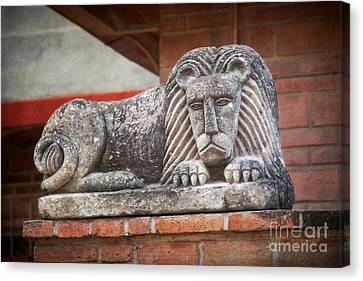 Leo On A Wall Canvas Print by Susan Isakson