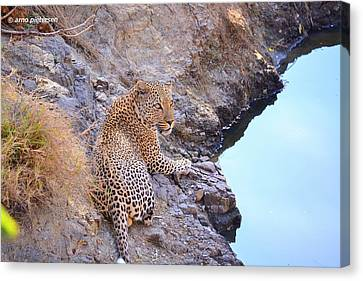 Leopard Canvas Print by Arno Pietersen
