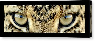 Leopard Eyes Canvas Print by Sumit Mehndiratta