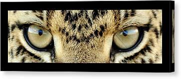 Leopard Eyes Canvas Print by Sumit Mehndiratta
