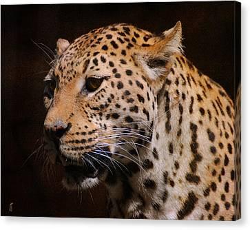 Leopard IIi Canvas Print by Jai Johnson