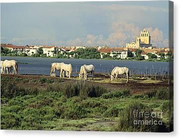 Les Saintes Marie De La Mer. Camargue. Provence. Canvas Print