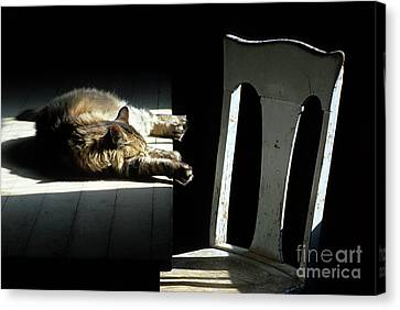 Catnap Canvas Print - Let Sleeping Cats Lie by Bob Christopher
