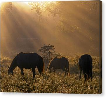 Let There Be Light Canvas Print by Ron  McGinnis