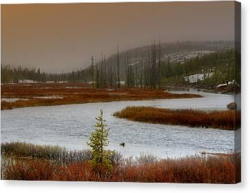 Lewis River - Yellowstone National Park Canvas Print by Ellen Heaverlo