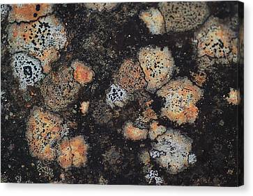Lichen Abstract Canvas Print by Susan Capuano