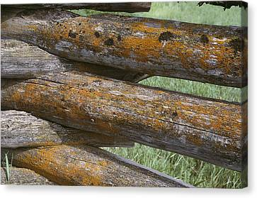 Lichens Growing On A Corral Fence Canvas Print by Stephen Sharnoff
