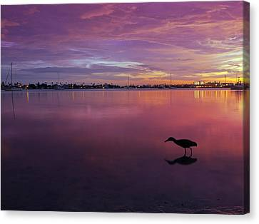 Life After Sunset Canvas Print by Melanie Viola