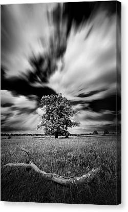 Canvas Print featuring the photograph Life In A Stride by John Chivers